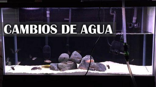 Cambios de agua en el acuario
