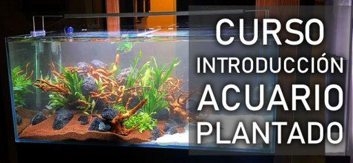 Curso acuario plantado