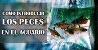 Como introducir peces en el acuario