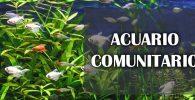 Que es un acuario comunitario
