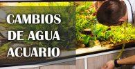 Como cambiar el agua del acuario